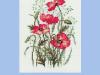 Pako - Wild Poppies