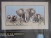 dimensions-slony